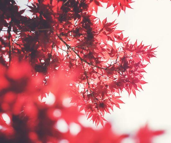 edc_automne